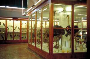 "Large hall of Birds, Museum of Natural History of Florence - Zoology Section (""La Specola"")."