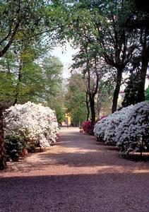 Immagine viale del giardino orto botanico giardino dei se for Giardino orto botanico firenze