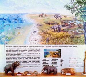 Vetrina sull'evoluzione del Valdarno, Museo Civico Paleontologico, Empoli.