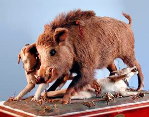 Diorama of wild boar hunting scene, made by Paolo Savi in 1824, Museum of Natural History and of the Territory, Calci.