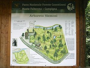 "Pianta dell'Arboreto Storico ""Carlo Siemoni"", Badia a Prataglia, Poppi."