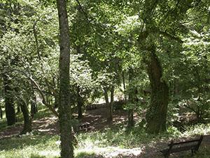 "Arboreto ""Carlo Siemoni"", Badia a Prataglia, Poppi."