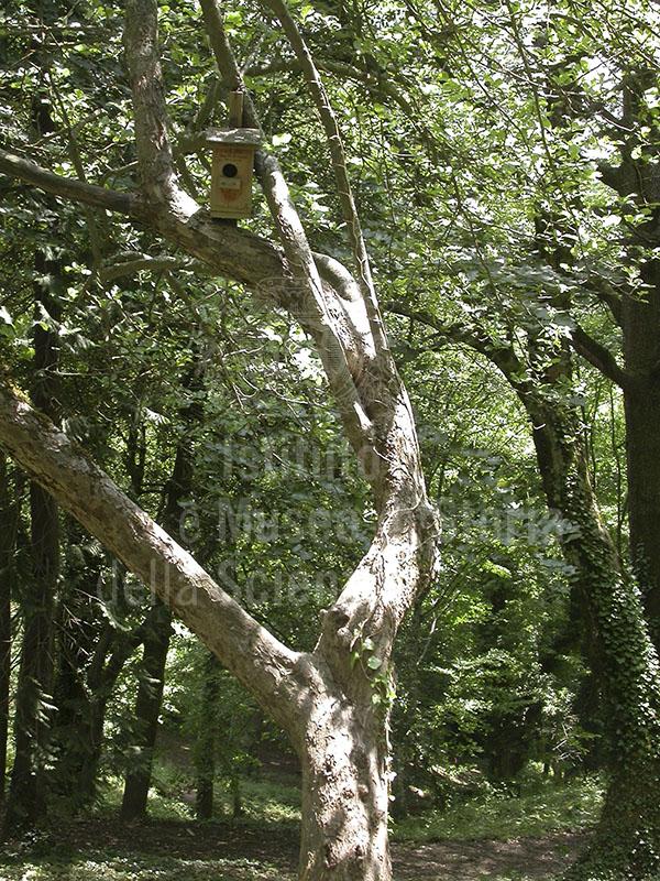 """Carlo Siemoni""  Arboretum, Badia a Prataglia, Poppi."