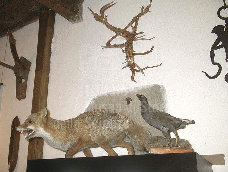 Volpe imbalsamata, Museo del Bosco e dalla Montagna, Stia.