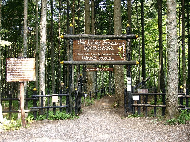 Orto Botanico Forestale dell'Abetone, Fontana Vaccaia, Abetone.