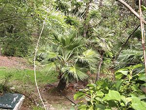 Giardino Botanico dell'Ottonella, Portoferraio.