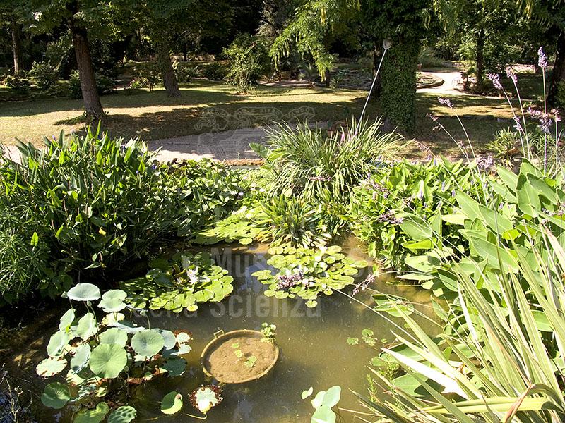 Immagine Giardino Botanico Superiore Di Boboli A Firenze V