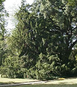 Museo di storia naturale di firenze orto botanico for M innamorai giardino dei semplici accordi