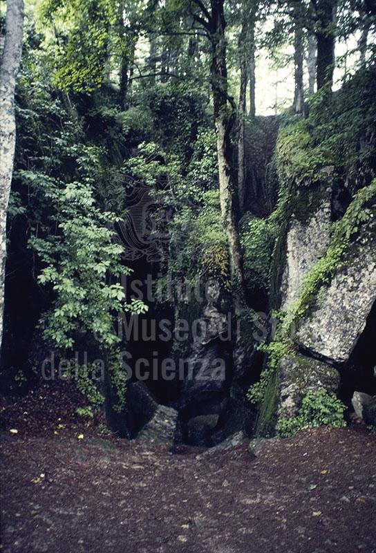 The forest of the Santuario de La Verna, Chiusi della Verna.