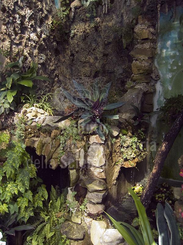 Un angolo nel Giardino delle Rose, Firenze.